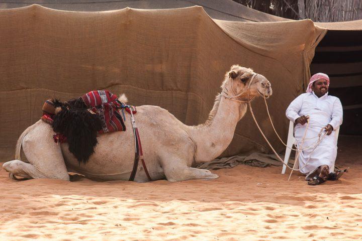 Camel-Abu-Dhabi-Heritage-Village