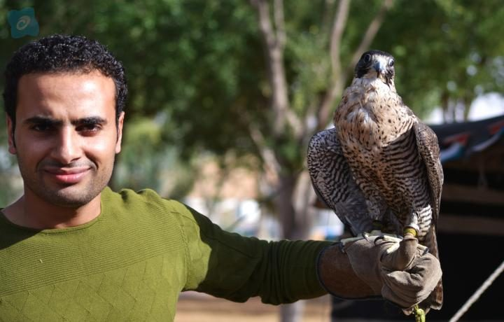 photography with eagle, falcon photo shoot dubai desert safari