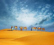 camel riding in morning desert safari dubai