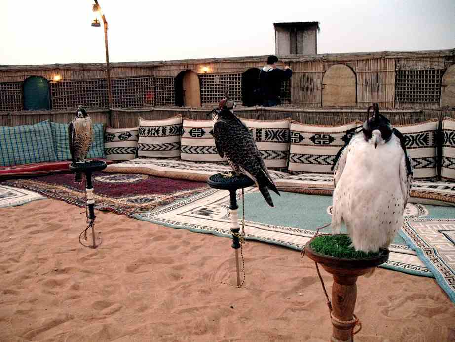 dubai history and falconry in desert
